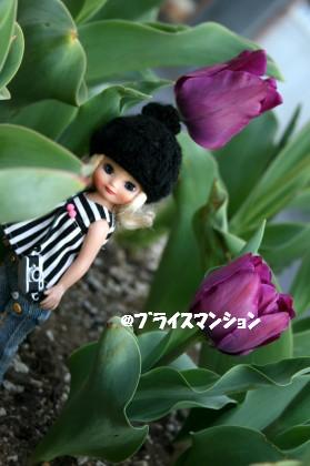 20090409_3997.jpg