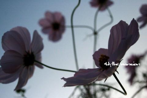 20091015_6188.jpg