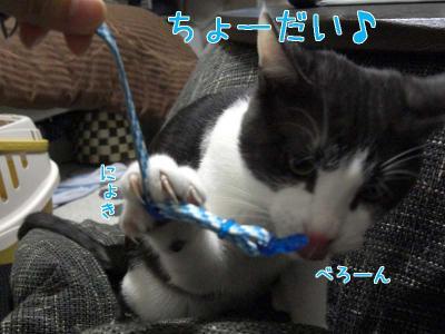 cho-dai♪