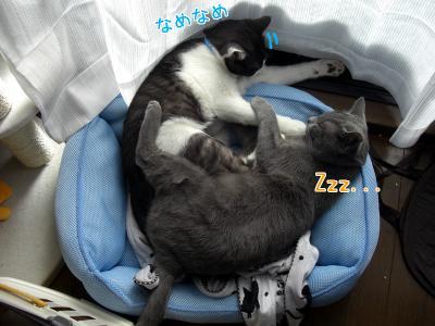 Zzz...