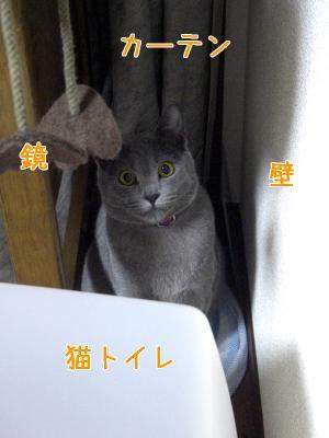 kokoga suki ♪