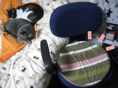new cushion♪