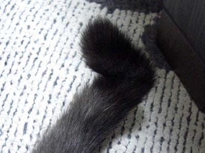 key tail♪