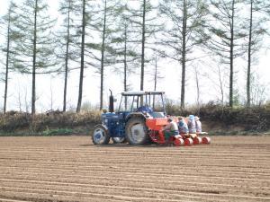 090512ジャガイモ植え