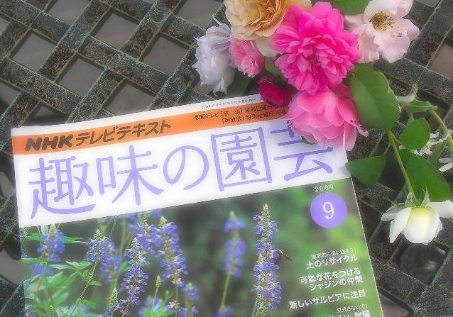 09趣味の園芸9月号