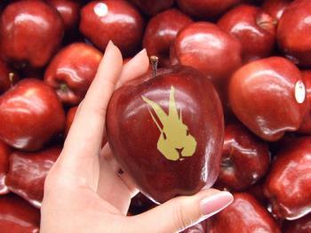 081211_ウサギリンゴ