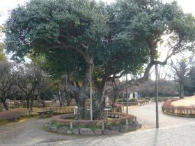 熊本市内3