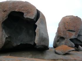 カンガルー島1日観光27