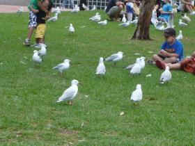 シドニーシティ観光22