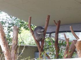 タロンガ動物園10