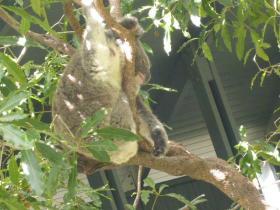 タロンガ動物園11
