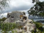 タロンガ動物園14