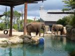 タロンガ動物園15