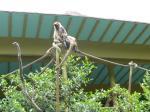 タロンガ動物園18