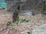 タロンガ動物園19