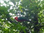 タロンガ動物園21
