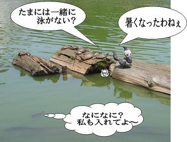 鳩首会談!?