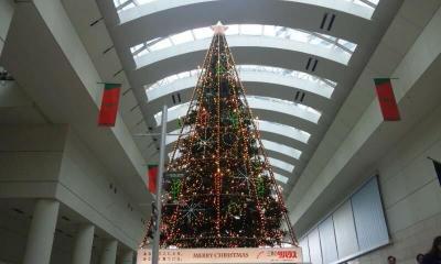 クイーンズスクエアのツリー