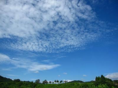 空が青いね~