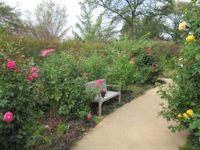野鳥の森ガーデン12