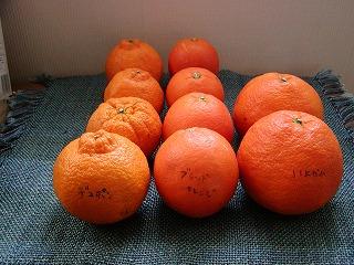 s-オレンジ