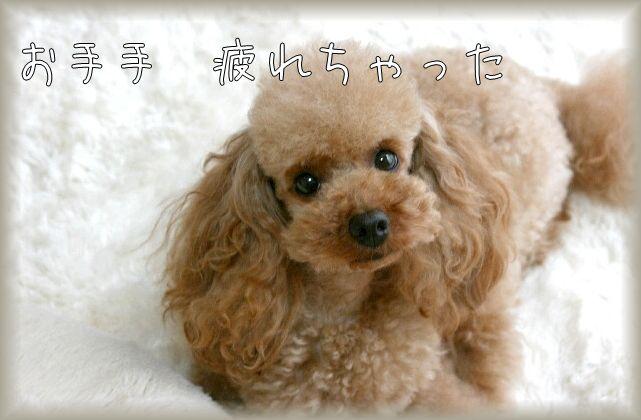 みるきー4
