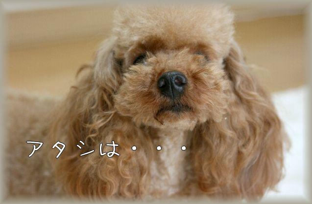 みるきー2