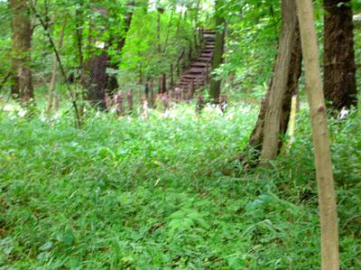 中里緑地保全地区おばけ山のギボウシ