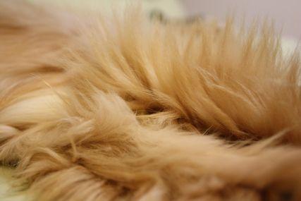 アルバの毛
