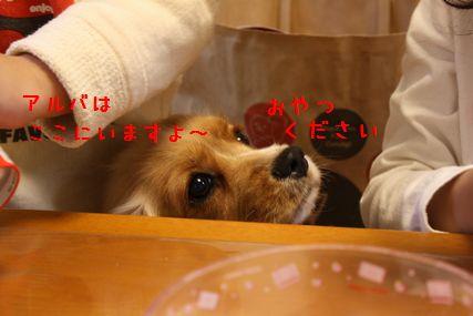 くださ~い1