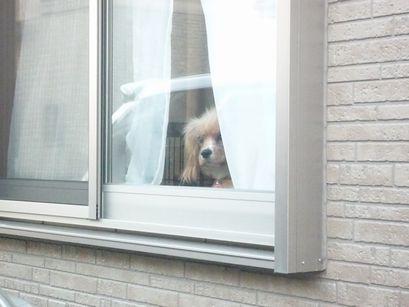 窓辺に潜むわんこ1