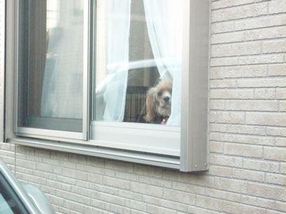 窓辺に潜むわんこ2