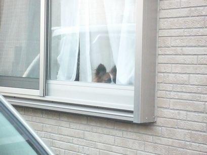 窓辺に潜むわんこ3