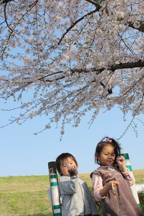 桜並木道4