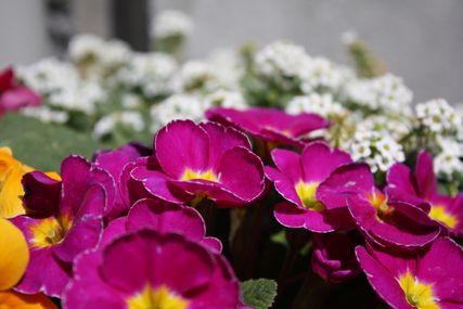 お花コレクション1
