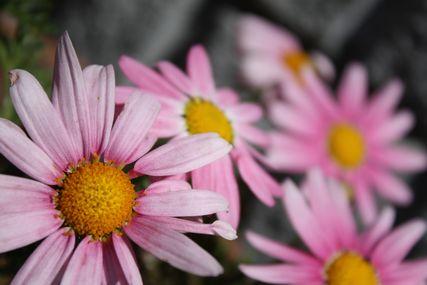 お花コレクション2