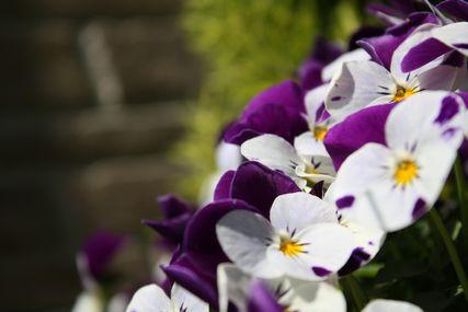 お花コレクション3