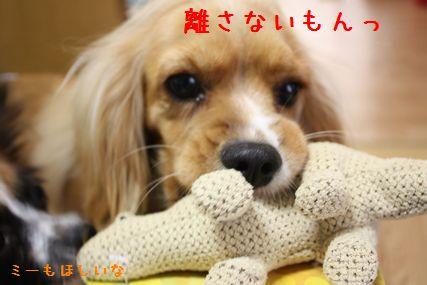プレゼントお披露目4