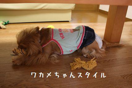 プレゼントお披露目12