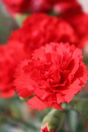 うちの花1