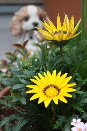 うちの花4