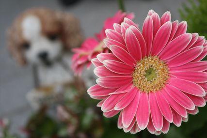 うちの花5