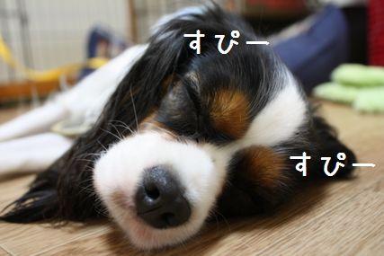 シーちゃん1