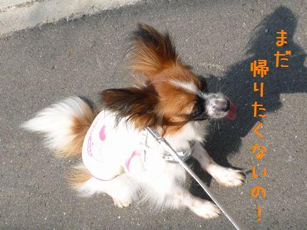 朝のお散歩4