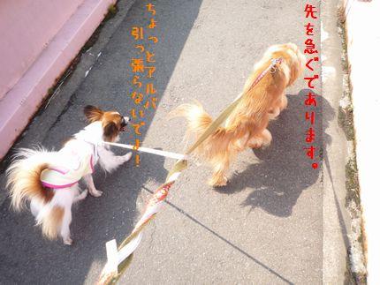 朝のお散歩1