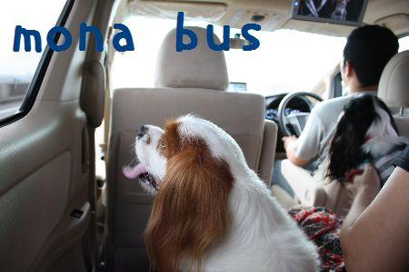もなバス? キャババス?