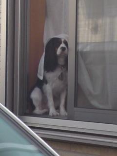 窓際シーちゃん