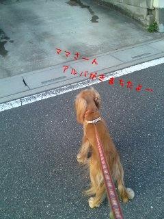 アルバの散歩5