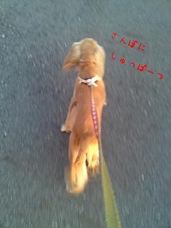 アルバの散歩13