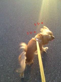 アルバの散歩9